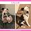 Thumbnail: Callie