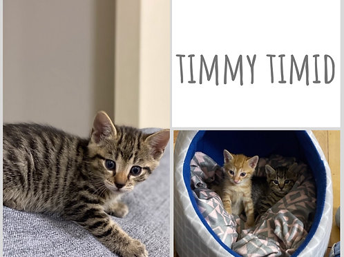 Timmy Timid