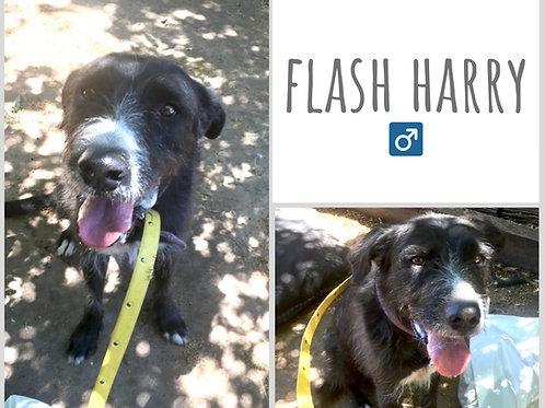 Flash Harry