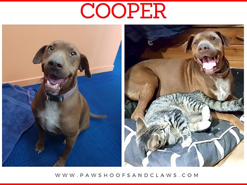 Cooper (Red)