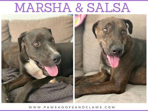 Marsha & Salsa