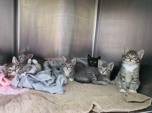 Six Adorable Moggies Need Homes...