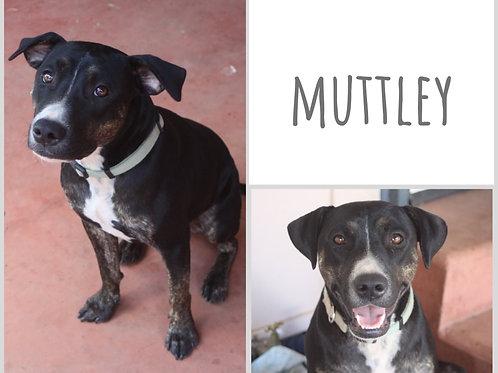 Muttley
