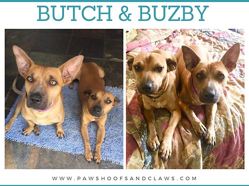 Butch & Buzby