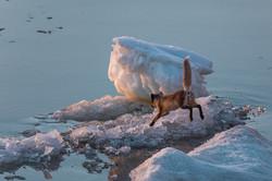 Охотник за льдинками
