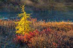 Осень на Колыме