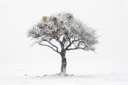 Дерево желаний. Карачаево-Черкессия