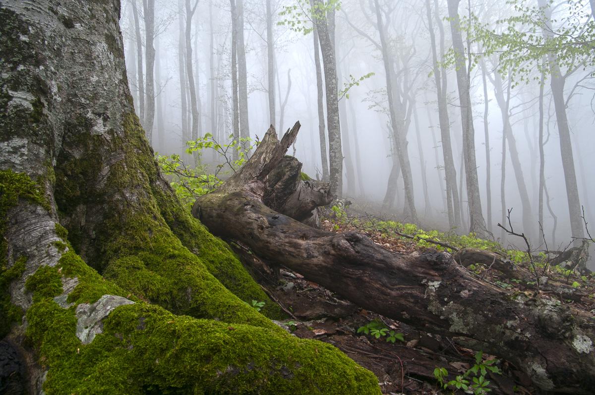Страж леса. Краснодарский край