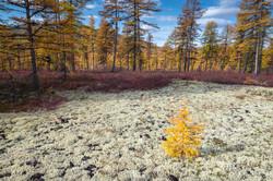 Осень за Эликчанских озерах