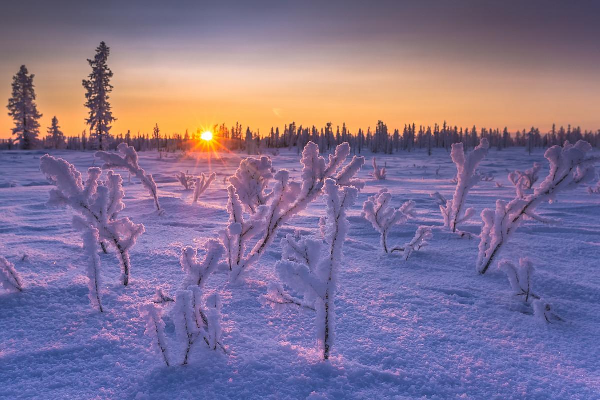 3. Yamal forest-tundra