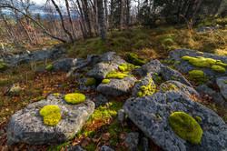 Курумник Сосьвинского камня