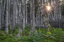 Сахалин - лес побережья