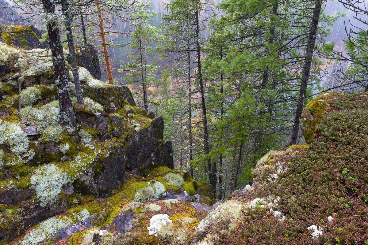 Ивдельский лес