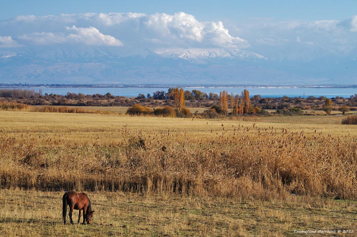 Восточный берег Иссык-Куль