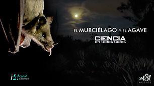 4_murcielago_agave copy.jpg