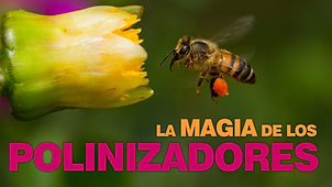 10_Poloniza.jpg