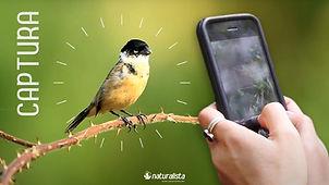 03_naturalista.jpg