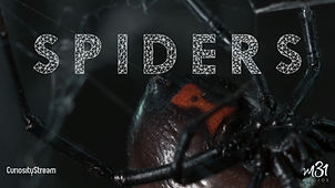 5_SPIDERS_PO_FULL.jpg