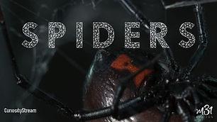 5_SPIDERS_PO_FULL.jpg