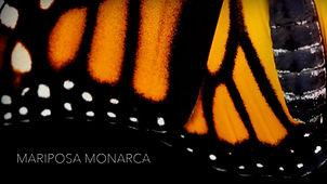 07_MONARCA.jpg