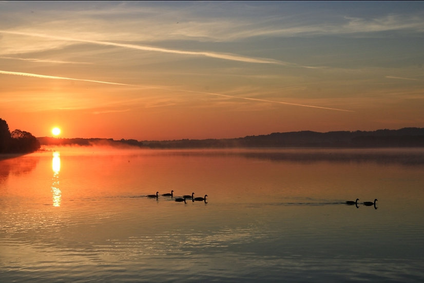 Print - Geese at Sunrise