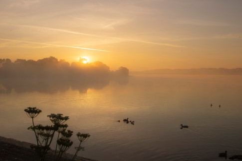Family of Ducks at Misty Dawn