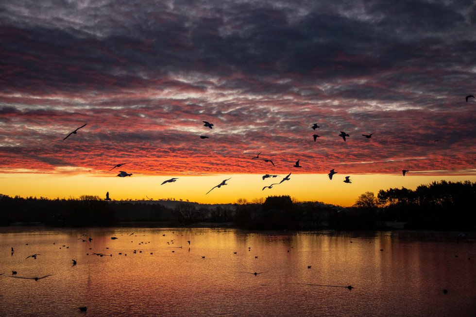Seagulls Swirling