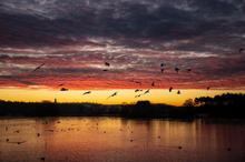 Copy of sunrise2.jpg