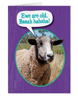 Sheep Shot Birthday Card