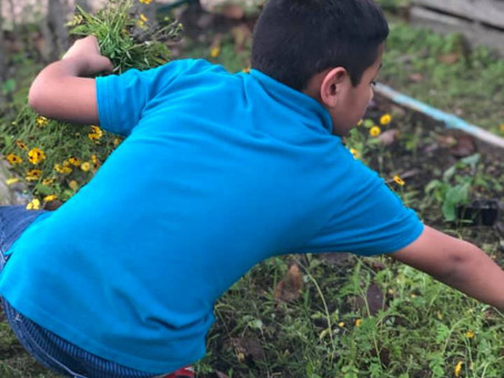 Los Fresnos News: Community Gardens Thrive in Brownsville