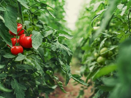 The Brownsville Herald: Horticulturalist to speak at Stillman House
