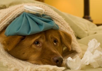 קרדיט לתמונה - http://dogs.lovetoknow.com/image/154956~sick-doggie.jpg