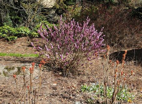 Kevätkuvia puutarhasta