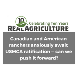 Canadian_and_American_ranchers_anxiously