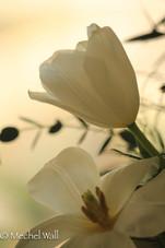 march flowers-36.jpg