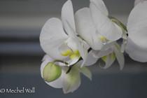march flowers.jpg