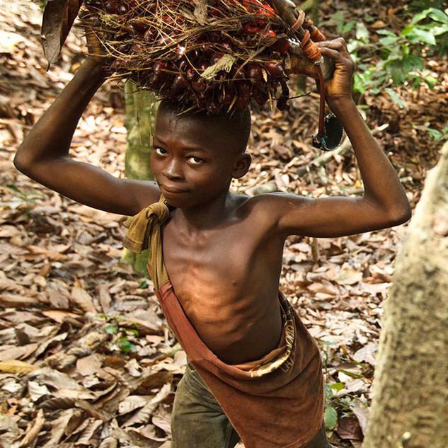 Cote-d-Ivoire_Kakao_UNI129916.jpg