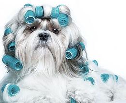 grooming_dogs.jpg