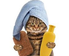 cat grooming.jpeg