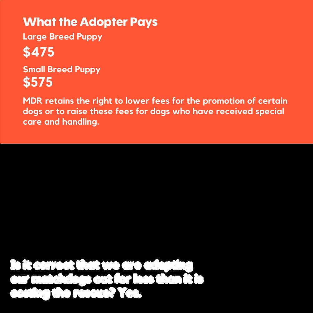 copycats_websiteversion-6.png