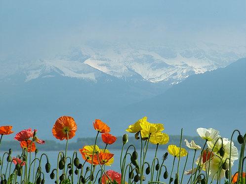 Méditations connection au Lac et au Mont-Blanc