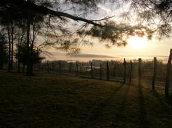 orchard-sunrise