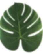60pcs-lot-35x29cm-feuilles-de-palmier-ar