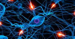 science-heart_neuroplasticity