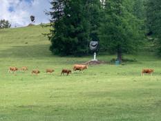 Troupeaux de vaches Valberg