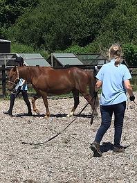 Pony in Training