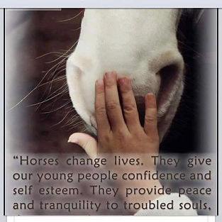 Horse Rescue Community