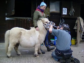 Pony and Dentist