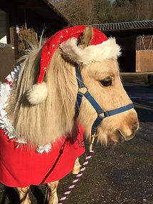H.A.C.K. Horse Pony