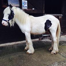 Rescued pony